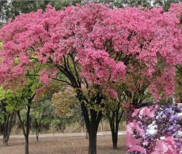 Floração Setembro